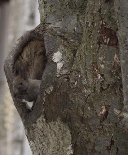 樹洞の中から