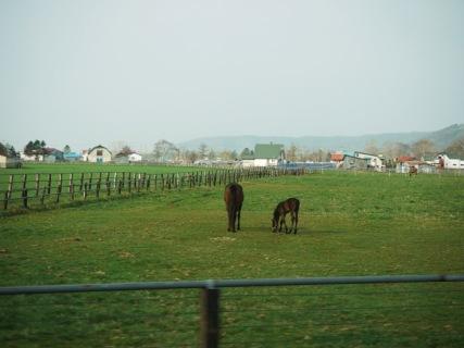 浦川の牧場