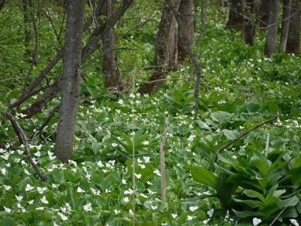 自然林の中のお花
