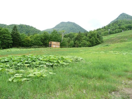 中央が富良野西岳