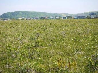 湿原と民家が共存