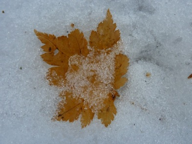 カエデの葉が彩り添えて