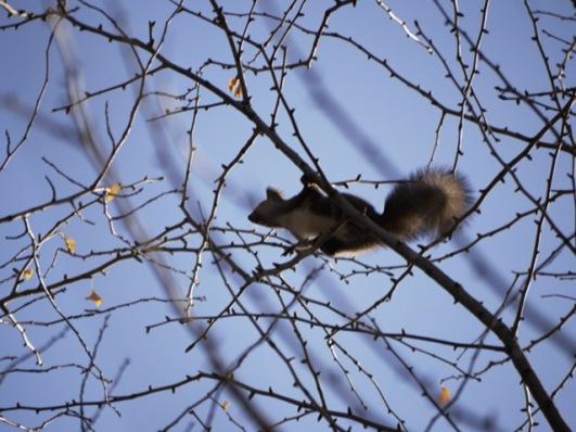 枝から枝へ