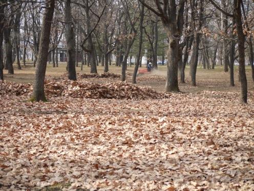 落ち葉の清掃