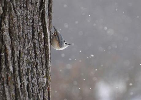 淡雪の中で