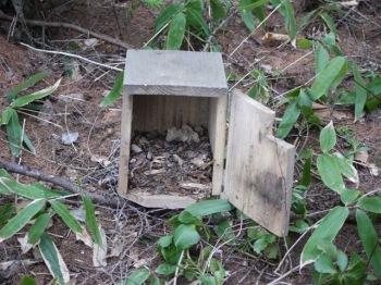 ゴジュウカラの巣跡