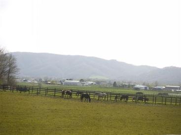車窓から浦河の牧場
