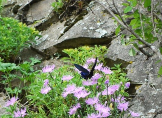 蝶と花4a