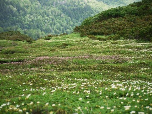 お花の絨毯