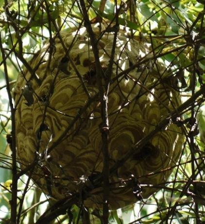 恐怖の蜂の巣