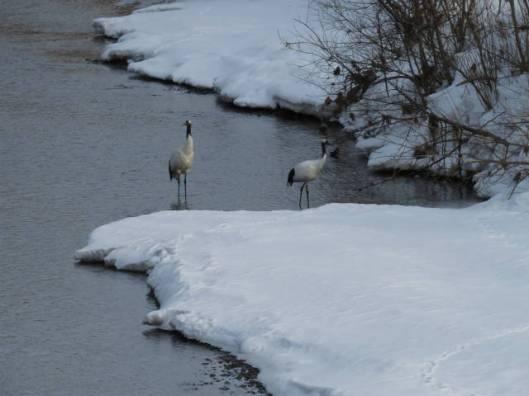 sIMG_3682川の中で