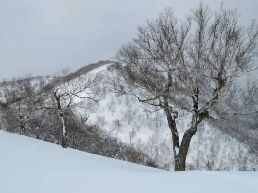 sIMG_5881竹の子山はこの山の越えて