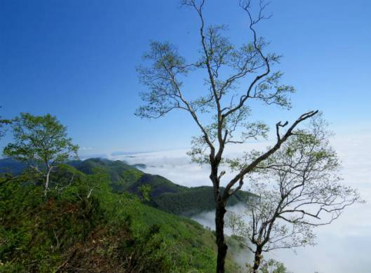 sIMG_3181広がる雲海