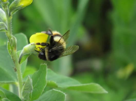 sIMG_3414花と蜂