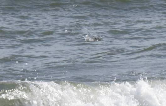 s10-2013-08-29 トイトッキ浜 146