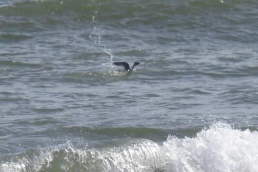 s11-2013-08-29 トイトッキ浜 148