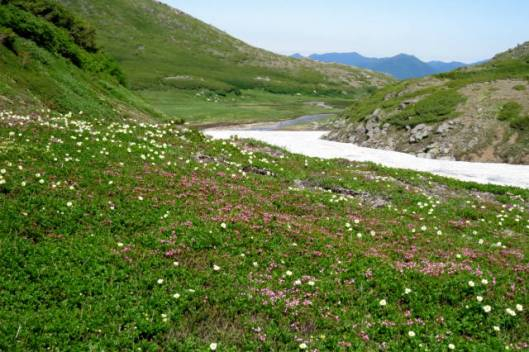 s2013-08-03 赤岳~黒岳縦走 169お花ロード