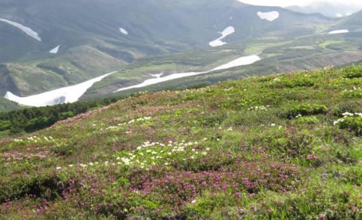 s2013-08-03 赤岳~黒岳縦走 194お花ロードA