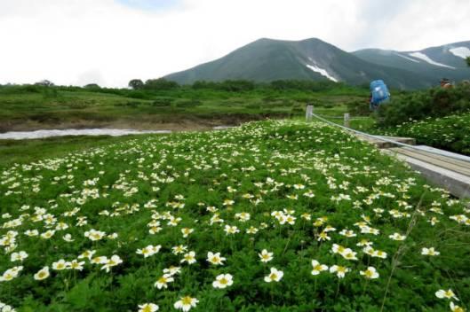 s2013-08-08 白雲避難小屋~高根が原~忠別岳 007第一花園A
