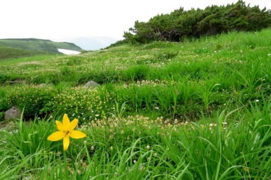 s2013-08-08 白雲避難小屋~高根が原~忠別岳 135