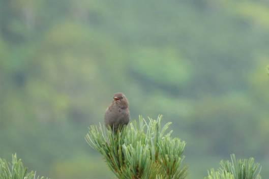 s2013-09-08 緑岳~トムラウシ山縦走 068