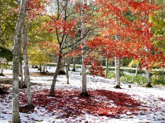2013-10-19 雪と紅葉 003A