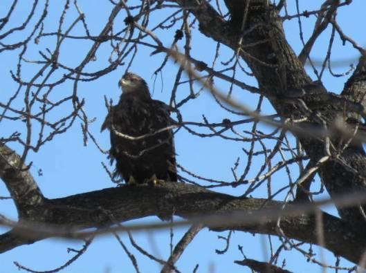 2013-12-15 鳥調査、新水路、帯広川 181
