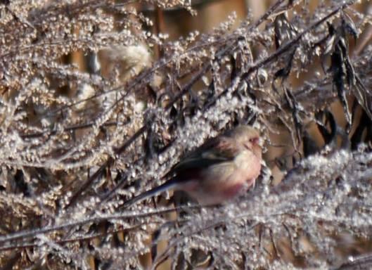 2014-01-05 新春鳥見 053