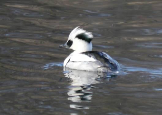 2014-01-05 新春鳥見 099