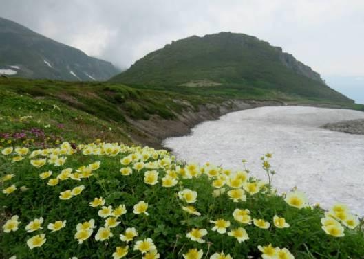 黒岳A 2014-07-25 038