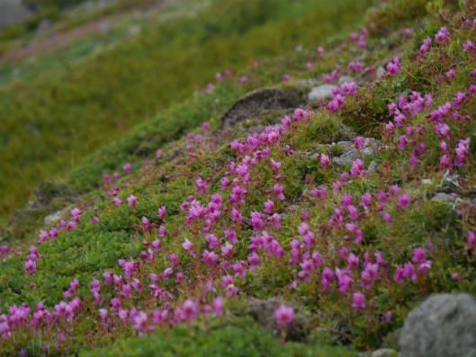 黒岳B 2014-07-24 133