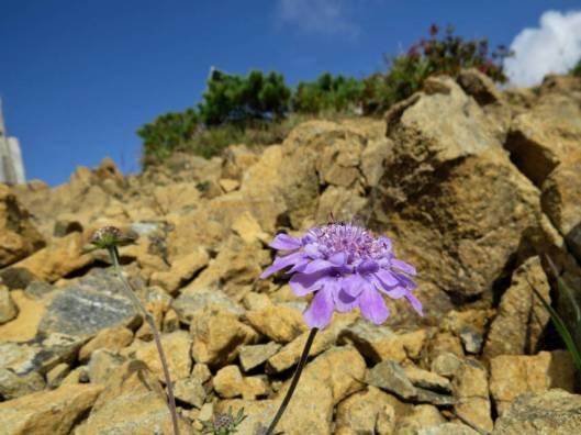 アポイ岳 2014-09-07 017