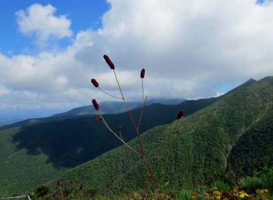 アポイ岳 2014-09-07 023
