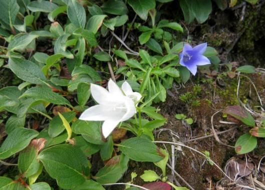 ニセカウ、赤岳 2014-08-25 088