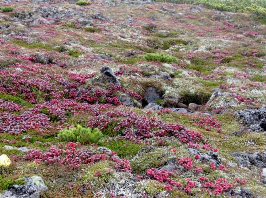 ニセカウ、赤岳 2014-08-25 093