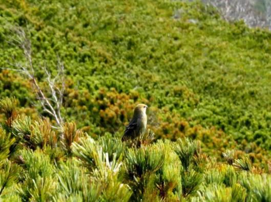 ユニ石狩と糠平の紅葉 2014-10-05 118