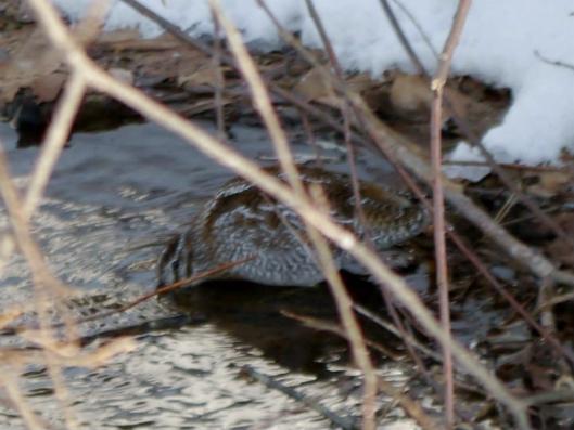 野鳥の会ワシ観察会 2014-12-23 026