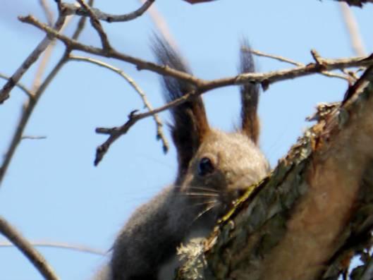 帯広川・帯広の森 2015-03-18 111
