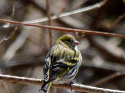 国見山と鈴蘭公園 2015-04-02 014