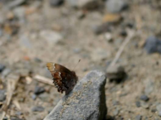 岩内仙境 2015-05-08 117