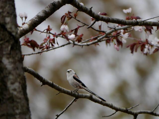 帯広川・十勝が丘展望台・親水PG周辺 2015-04-28 136