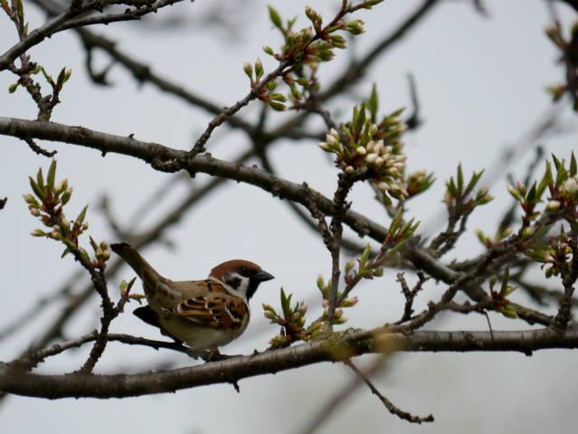帯広川・十勝が丘展望台・親水PG周辺 2015-04-28 246