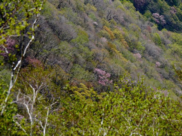 横山中岳 2015-05-06 053