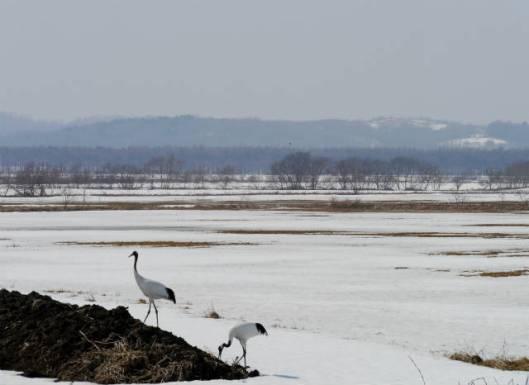 豊北タゲリなど 2015-03-30 053