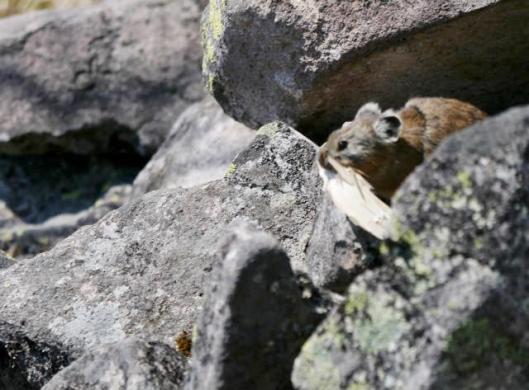東ヌプカウシヌプリと駒止湖 2015-05-27 081