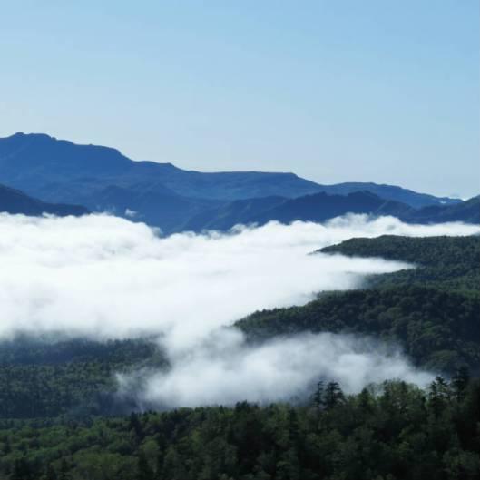 黒岳 2015-06-12 014