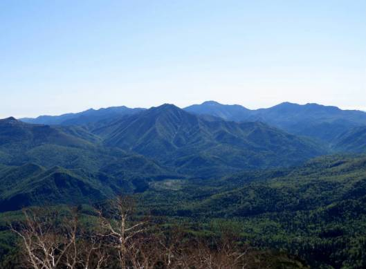 黒岳 2015-06-12 033