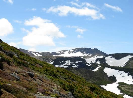 黒岳 2015-06-12 054