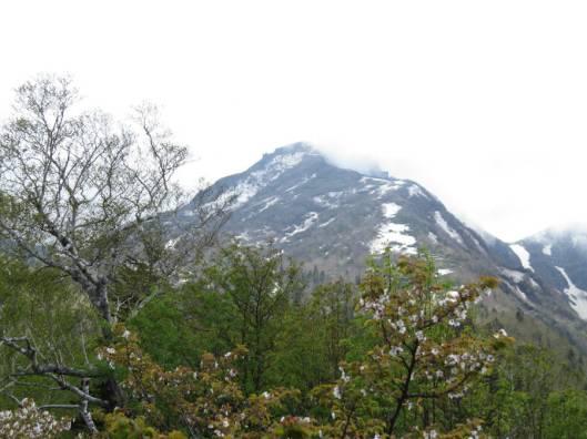 黒岳 2015-06-12 074