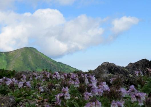 赤岳~白雲岳 2015-08-02 033